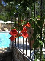 location avec piscine, jardin fleurie